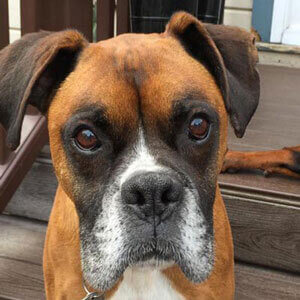 Picture of Allie's Alpha dog, Max - Passed away August 2018.